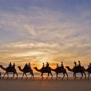 caravana cammello