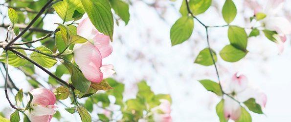 flowerverde